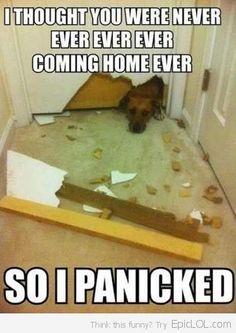 Separation Anxiety Dog Logic
