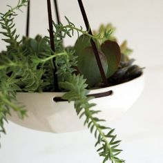 Three options for creating hanging succulent arrangements, either indoors or outdoors. Above: New from Pigeon Toe Ceramics: the Porcelain Faceted Hanging T Types Of Succulents, Hanging Succulents, Succulent Arrangements, Succulent Pots, Hanging Planters, Hanging Gardens, Succulent Care, Diy Hanging, Bonsai