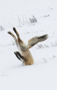 Finalists For The 2016 Comedy Wildlife Photography Awards