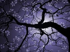 moonlight in the trees..