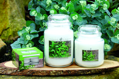 Minted Eucalyptus by Goose Creek. Available at Aromatize!