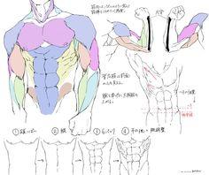Twitter / ____mov: 個人的、筋肉の描き方① ...
