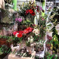 Hanging Basket Florist - Google+