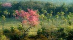 La flora en el Paraguay también están protegidas, y se puede contemplar la belleza de cada una de ellas, describiendo a nuestro país y que también están protegidas. http://country.paraguay.com/turismo/fauna_y_flora.php