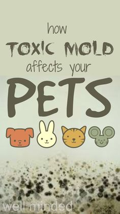 How Toxic Mold Affects Your Pets From Hybridrastamama