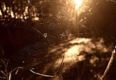 Spider-Man ya tiene competencia - http://staff5.com/spider-man-ya-competencia/