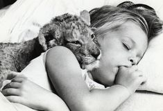 Lion cub with sleeping girl - John Drysdale