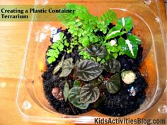Super easy terrarium in a plastic lettuce container! Became home to tiny Star Wars guys!