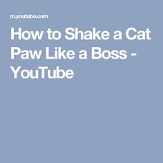 How to Shake a Cat Paw Like a Boss - YouTube