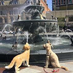 This New Dog Fountain At Berczy Park was unveiled for the pleasure of both locals and tourists to enjoy and walk about with their furry four-legged friends.