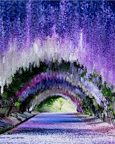 Wisteria Tunnel, Kawachi Fuji Gardens in Kitakyushu, Japan.⠀⠀ ⠀⠀⠀⠀⠀⠀⠀⠀⠀ ✪Photo by: ⠀⠀⠀⠀⠀⠀⠀⠀⠀ Beautiful Landscapes, Beautiful Gardens, Beautiful Flowers, Wisteria Garden, Wisteria Tunnel Japan, Wisteria Tree, Wisteria Trellis, Purple Wisteria, Wisteria Wedding