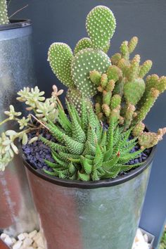 Funky cacti and succulents :)