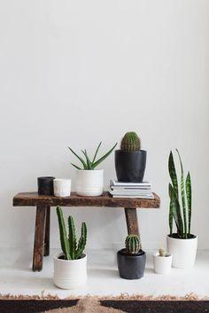 Cactus house decor