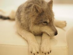 Needle Felted Wolf Eves wool felting.