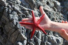 Kalymnian star