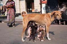 Breakfast - Kolkata, India | Flickr: Intercambio de fotos