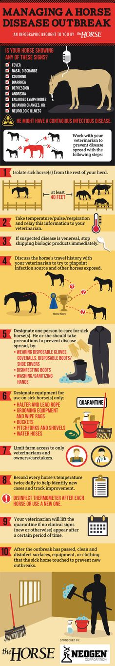 [INFOGRAPHIC] Managing a Horse Disease Outbreak - TheHorse.com | Is your horse showing clinical signs of an infectious disease? Here's how to care for your horse and protect others during an outbreak in our step-by-step visual guide, brought to you by TheHorse.com and Neogen. #infectiousdisease #biosecurity #horses #horsehealth #outbreak #infographic