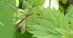 Die 11 effektivsten Methoden zur Insektenabwehr - Mückenfrei ohne Chemie