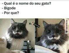 Itimalia que bigode lindo 😍 .