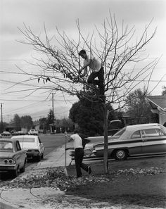 My Dad Thinks It's A Good Idea To Take All The Leaves Off The Tree And Rank Up The Yard. I Think He's Crazy, by Bill Owens, 1971