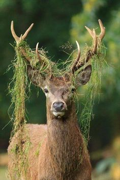 Deer - ummm you got a lil-sum-sum on your head....