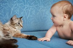 Having a baby can make Mom and Dad rethink everything in the house. What about pets that have lived at home before the baby is born? Is it true that these animals bring positive benefits for the Little One? Dwelf Cat, Sphynx Cat, Baby Pictures, Cute Pictures, Munchkin Kitten, American Curl, Living With Cats, Human Babies, Photo Chat