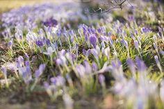 Welcome Spring! | Flickr