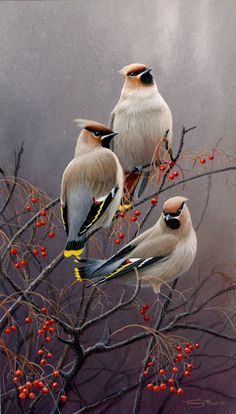 <3 <3 Waxwings, by, UK Wildlife Artist Jeremy Paul..Brilliant! <3 <3