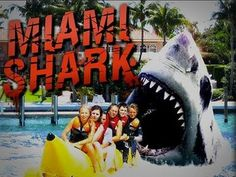 Miami Shark - Shark Week 2012