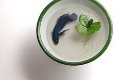 Chai Soong Ng Acrylic on Resin