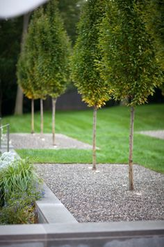 Creative Tonic loves outdoor tree landscaping with gravel