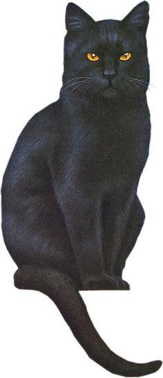Black Kitty, grey kitty's sissy