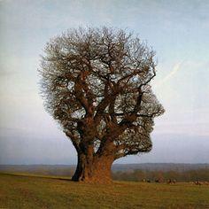 tree shaped like a head... kinda weird