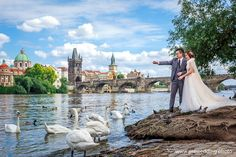 Nice place to take few beautiful pre-wedding shots with a swans and Charles Bridge in Prague⁠ ⠀⁠ Charles Bridge, Nice Place, Elope Wedding, Swans, Prague, Wedding Photos, Europe, Wedding Photography, Places