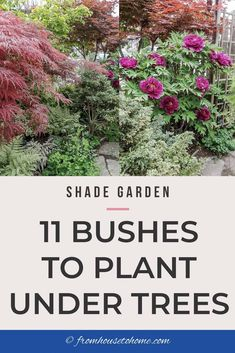 3311 Best Gardening For Beginners Images In 2020 Gardening For