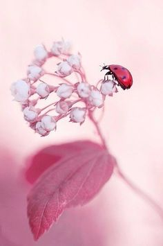 lady bug and pink flowers Photo Macro, Beautiful Flowers, Beautiful Pictures, Bugs And Insects, Container Flowers, Macro Photography, Belle Photo, Beautiful Creatures, Beautiful World