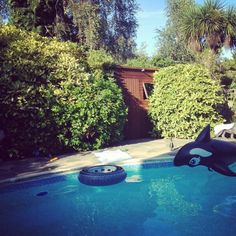 T: @PhilippaDunjay Impromptu pool party - dreamy! #CelebrateTheSun