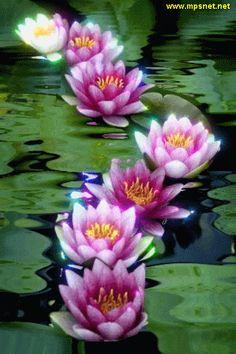 Flowers Gif, All Flowers, Exotic Flowers, Gifs, Beautiful Gif, Beautiful Flowers, Lotus Flower Pictures, Gif Bonito, Rainbow Waterfall