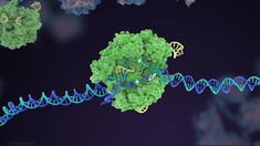 Breakthrough CRISPR Gene Therapy Could Be a 'One and Done' Injection Beta Thalassemia, Sickle Cell Anemia, Gene Therapy, Higher Dose, In Vivo, One Hit Wonder, Medicine Journal, Nobel Prize