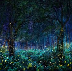 Sanctuary of fireflies. Photo by Pepe Soho, forest in Nanacamilpa, Tlaxcala, Mexico Magical Forest, Dark Forest, Amazing Places On Earth, Wonderful Places, Night Forest, Destination Voyage, Fantasy Landscape, Out Of This World, Landscape Photography