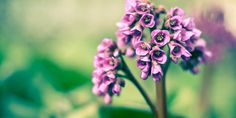 Flower Plant Bud