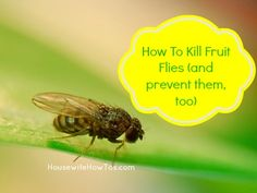 How To Kill Fruit Flies (and prevent them, too), because they're not just disgusting -- they can also carry bacteria throughout your house. via Housewife How-To's®
