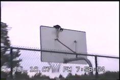 Cat sliding down a pole