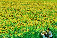 日本の魅力再発見! 行って良かった国内の旅先10選 Japan Summer, Japanese Landscape, Visit Japan, Under Pressure, Japan Travel, Scenery, Outdoor, Instagram, Rain