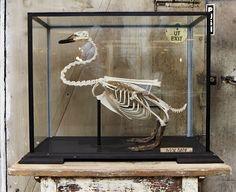 J'en veux un dans mon salon pour accompagner mon crâne de marmotte!