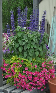 Container gardening in the shade can be a bit tricky. This list of blue plants for containers in the shade will have the pots on your patio, walkway or porch looking beautiful all summer long. Container Herb Garden, Container Gardening Vegetables, Container Plants, Flower Containers, Vegetable Garden, Flower Garden Plans, Flowers Garden, Planting Flowers, Nail Design Spring