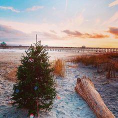 Новый Год Tis The Season, Coastal Living, Seasons, Instagram, Seasons Of The Year