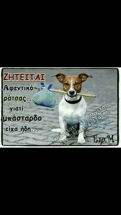 Kindness To Animals, Funny Greek, Greek Quotes, Animal Kingdom, Animals And Pets, Dog Lovers, Dog Cat, Best Friends, Funny Quotes
