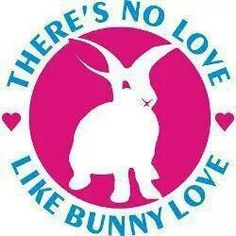 There's no love like bunny love..