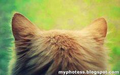 My Favorite Photos: adopt a cat